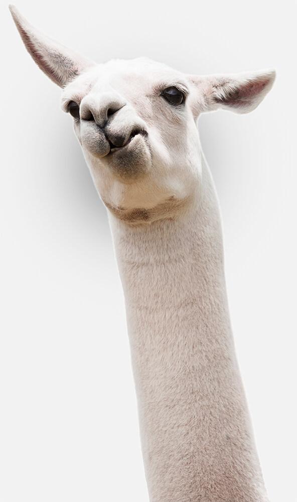 SearchFit Llama
